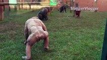 Deux chimpanzés sans poil martyrisent les autres animaux dans leur enclos