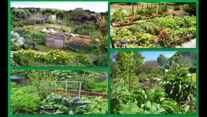 Changer le monde EL4DEV - Le Papillon Source Inner Africa - Permaculture forêt pluviale Afrique développement changement