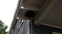 new day pest control ! wasp nest - Protect your family from unwanted pests!
