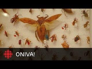 ONdécouvre - Pete Heule, le « Bug Room »