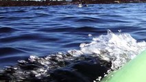 Paddling with Risso's dolphins at Carmel Beach