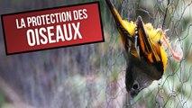Ces chiffres alarmants montrent à quel point il est urgent de protéger les oiseaux - DES CHIFFRES ET LE MONDE