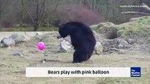 Bears - Pink Baloon