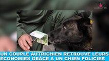 Un couple autrichien retrouve leurs économies grâce à un chien policier ! L'histoire dans la minute chien #156