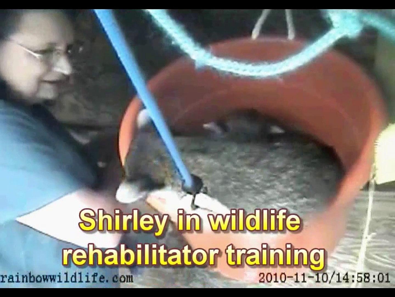Shirley in Wildlife Rehabilitation Training