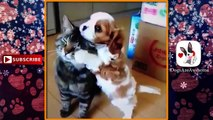 Funny Dogs and Cats #62  | Funny Dogs | Dogs and Cats | Dogs and Cats Playing Together