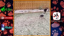 Dogs Discovering Snow #29 ⛄ ,  Dogs in Snow ,  Funny Dogs ,  Dogs playing in Snow ,  Dog Snow