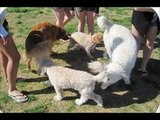 Funny Animals  Funny Animals  Dogs Funny Clips  Comedy Fails & Bloopers (Funny)