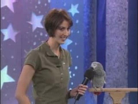 Perroquet qui parle