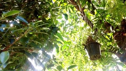 Into the light(ชาตรี คงสุวรรณ)-ปิงปอง ศิรศักดิ์ & Sbyderman cover