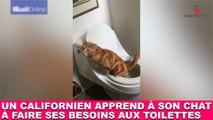 Un californien apprend à son chat à faire ses besoins aux toilettes! L'exploit dans la minute chat #157