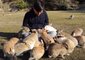 Cuddly Rabbits Swarm Tourist for Carrots