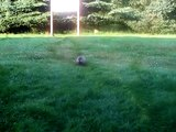 Georgette la marmotte de la Forêt Montmorency