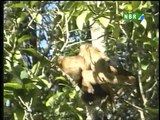 Florestas brasileiras com a garantia de exploração segura e não predatória