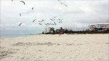 Une fille chassée par des mouettes sur la plage... Elles ont très faim