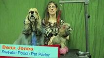 Dog Grooming Austin TX 512-927-2968 Sweetie Pooch Pet Parlor - Color & Feathers Dog Grooming Austin