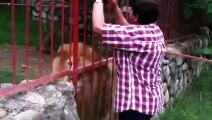 Une femme demande un câlin à un très gros lion
