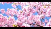 中澤裕子[エンタメバラエティ The☆ヒット情報]160315 part2