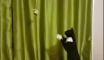 Cat trying to catch something dangling too far away