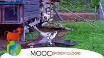 FUN MOOC : Bases en épidémiologie des maladies animales