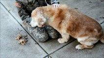 Ce chien retrouve sa maîtresse soldat après quelques mois d'absence, sa joie est trop mignonne !