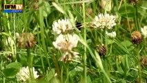 Pesticides tueurs d'abeilles: le trouble jeu de Le Foll