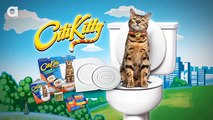 The Craziest New Inventions For Cats