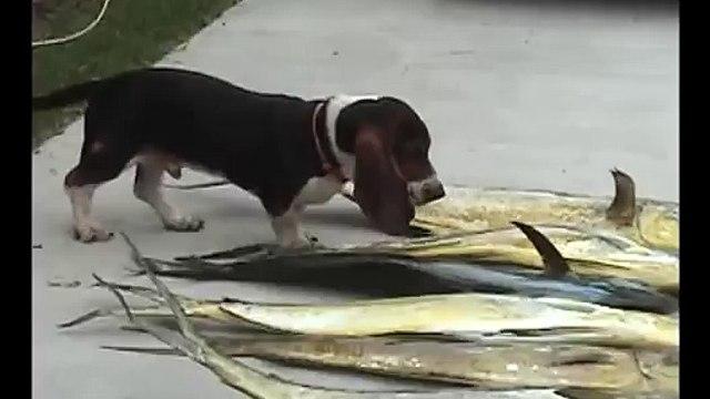 Rufus confused