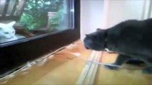 Animals Talking - Funny Compilation - Talking Cats