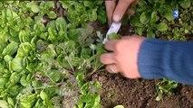 Nièvre : la ville de Nevers recherche des maraîchers
