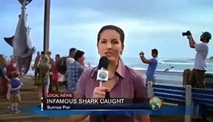 Big Shark Caught In Australia