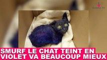 Smurf le chat teint en violet va beaucoup mieux ! Prenez de ses nouvelles dans la minute chat #162