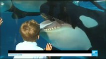 Etats-Unis : SeaWorld met à terme à l'élevage d'orques en captivité