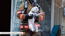 Dog Rescued From Blazing Apartment Can't Stop Grinning