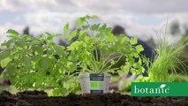 Nouveau Monde DDB pour Botanic - « Vivre un printemps sans pesticide et sans pareil » - mars 2016