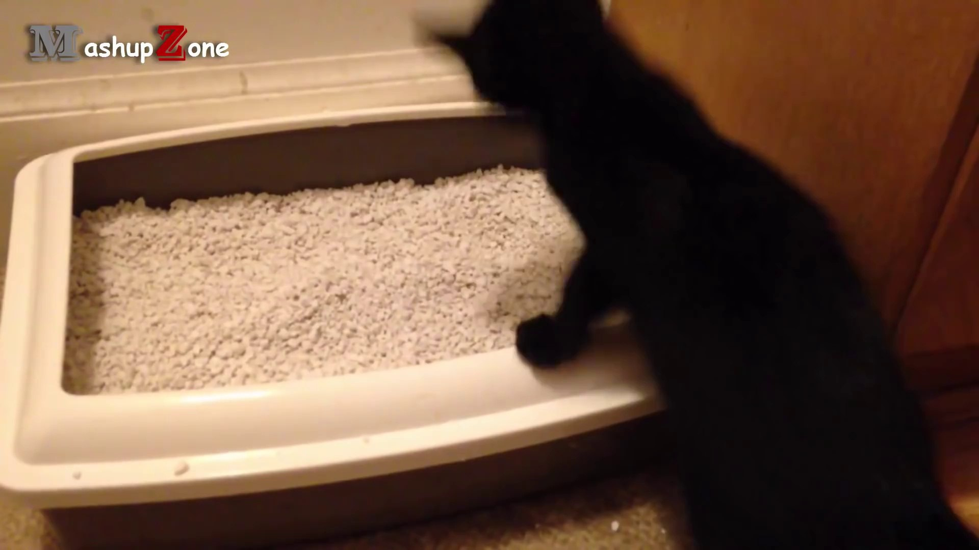 Cats Vs. Shadow Cats