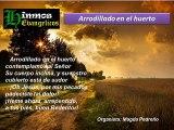 Himno Evangélico ARRODILLADO EN EL HUERTO Mensajes Musicales Evangélicos
