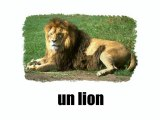 Learn French - Les animaux vol1