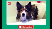 Funny Dogs Hate Baths Compilation - Funny Dog Videos, Funny Dogs, Funny Animals