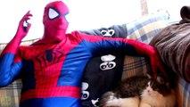 Spiderman vs Catwoman vs Batman in Real Life! Catwoman Kidnaps Batman - Fun Superhero Movie :)