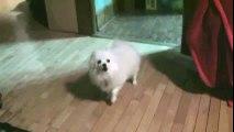 Minuet of Dog