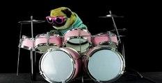 Pug plays Enter Sandman, Metallica