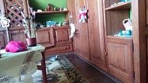 Chinchilla dust bath funny.Funny chinchilla compilation.Cute little animals compilation.