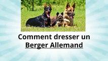Comment Dresser son Berger Allemand - Conseil dressage Berger Allemand