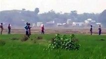 News : En Inde, cinq paysans tués par des éléphants sauvages !