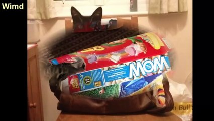 Funny Cats Immediately Regretted with Their funny fail Choices | Funny cat photos 2016