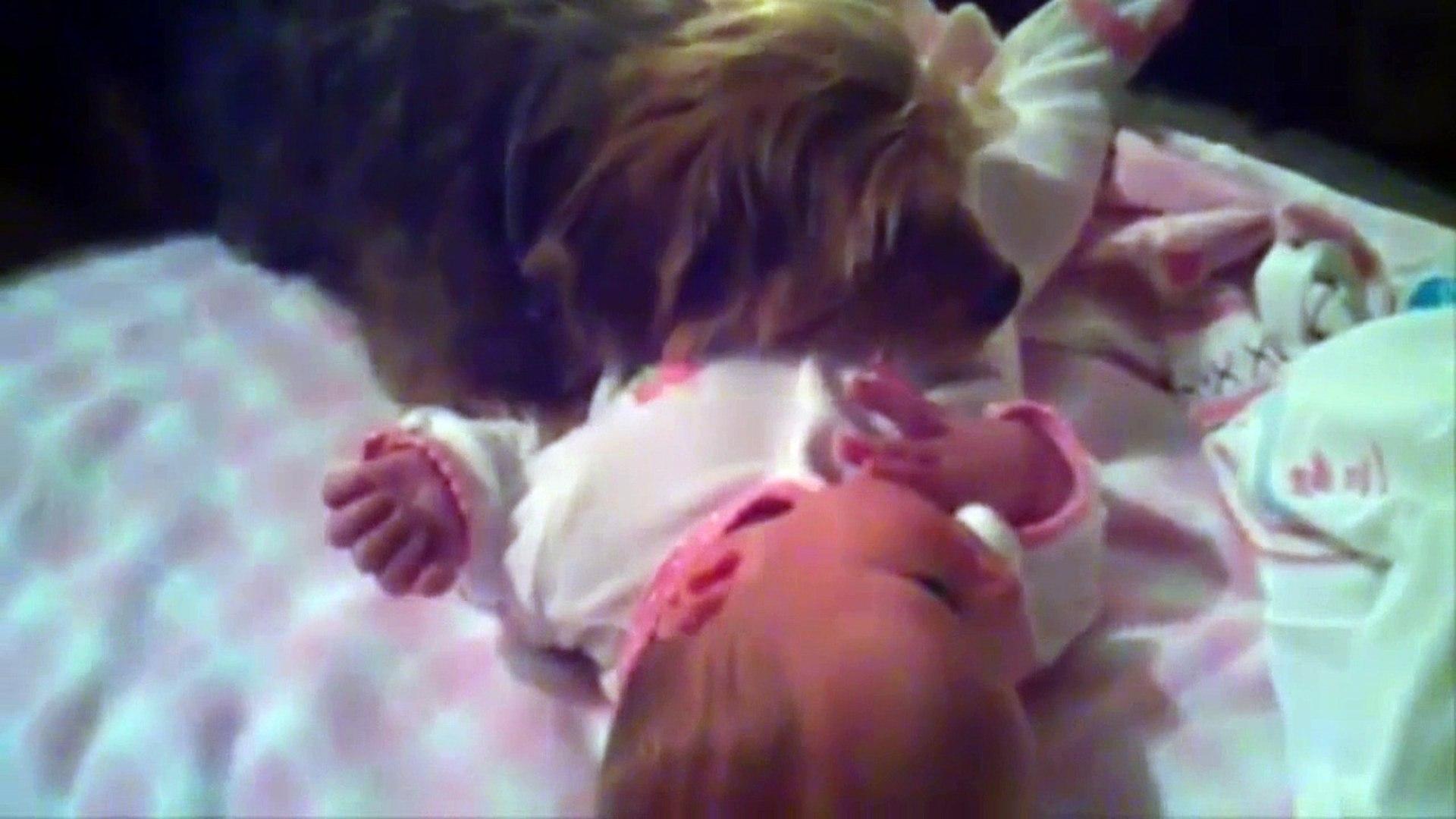 Cutes Animal Love Baby Videos