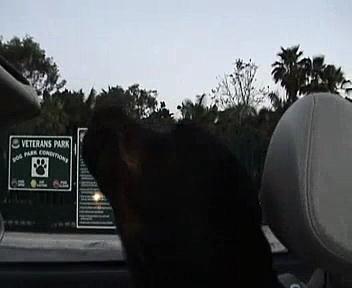 Zack the Singing Rottweiler