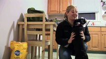 Safe Home, Safe Puppy