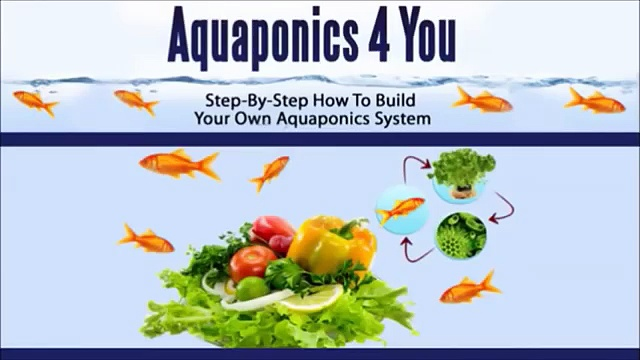 Aquaponics 4 You Review – Is Aquaponics 4 You As Good As It Sounds